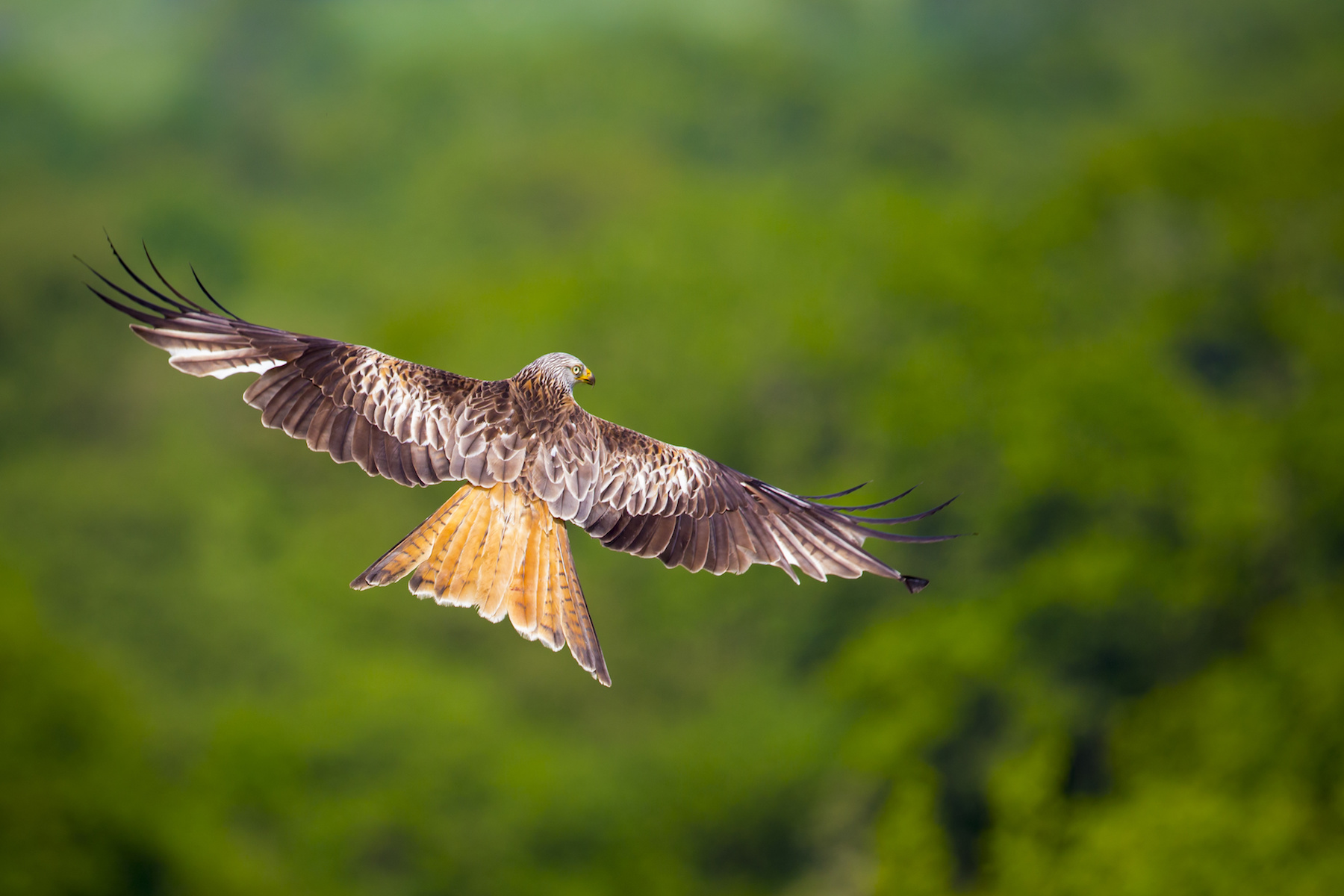 Dolcoed Red Kite Naturist Site Carmarthenshire West Wales